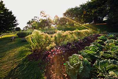 Attirant The Vegetable Garden Today