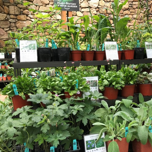 Herbs and Thomas Jefferson's Collection | In the Garden ...  |Thomas Jefferson Garden Seeds