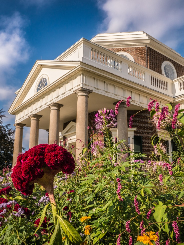 Oblique angle of Monticello's West Portico looking up through Coxcomb, Prince's Feather and Spiderflower blossoms; photo by Ian Atkins.
